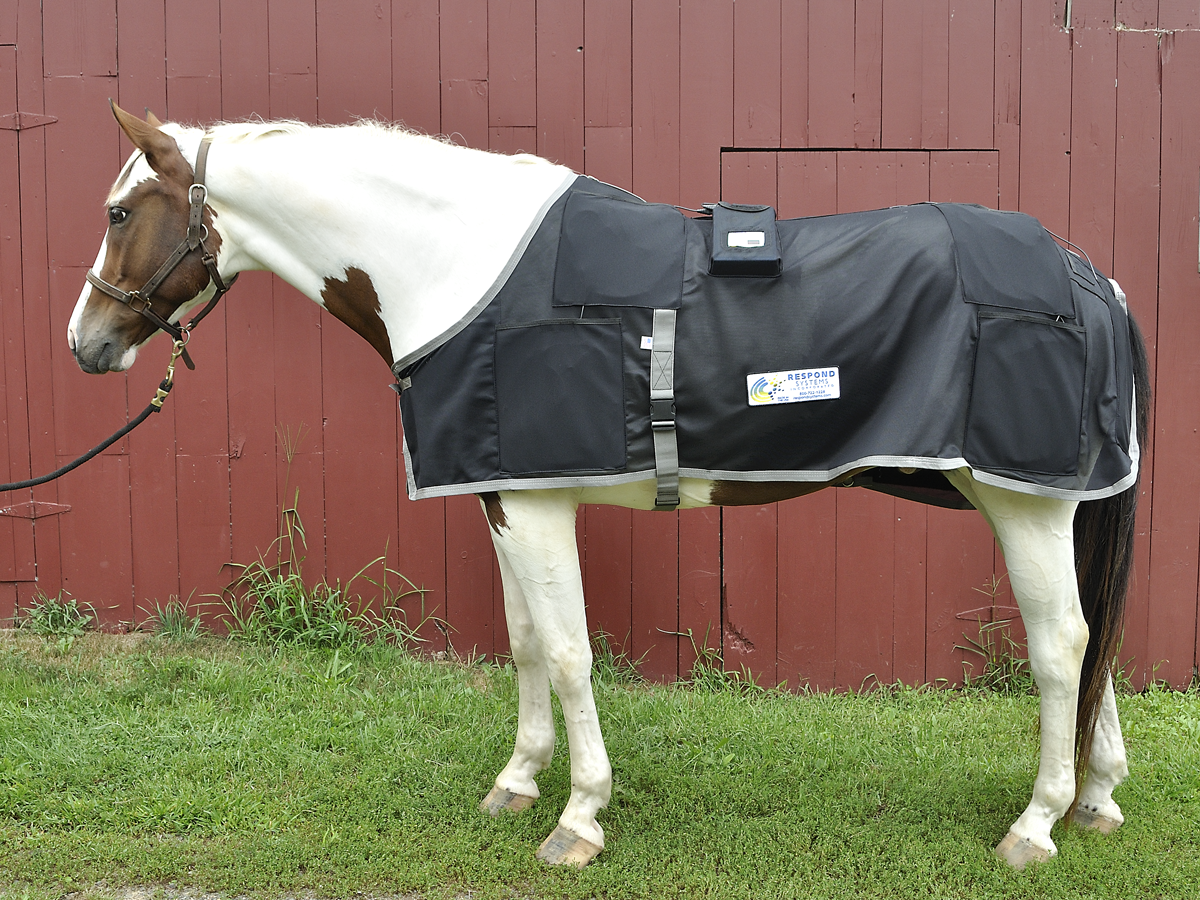 Magnetic Horse Rugs Do They Work Rugs Ideas